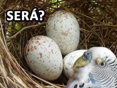 Como suspeitar se minha ave esta doente pelo desenvolvimento do ovo?